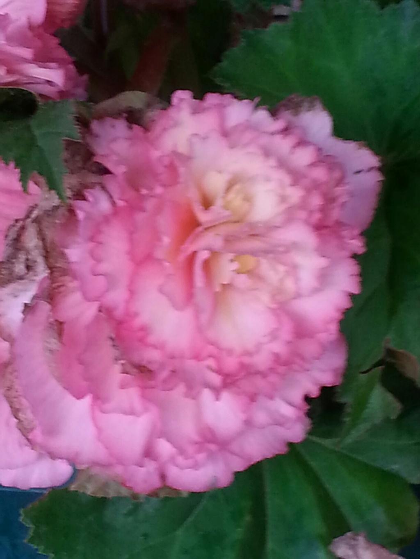 mon jardin 2015... - Page 20 20180732