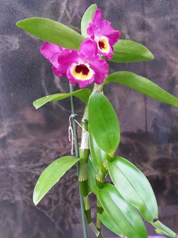Les orchidées - Page 35 20190317