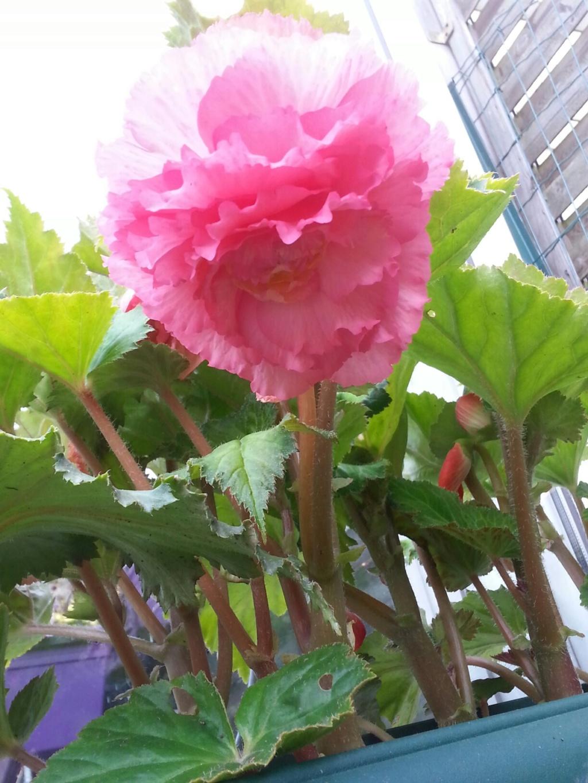 mon jardin 2015... - Page 19 F_bzog10