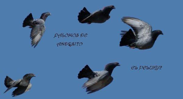 fotos andresito de algeciras - Página 4 Paloma11