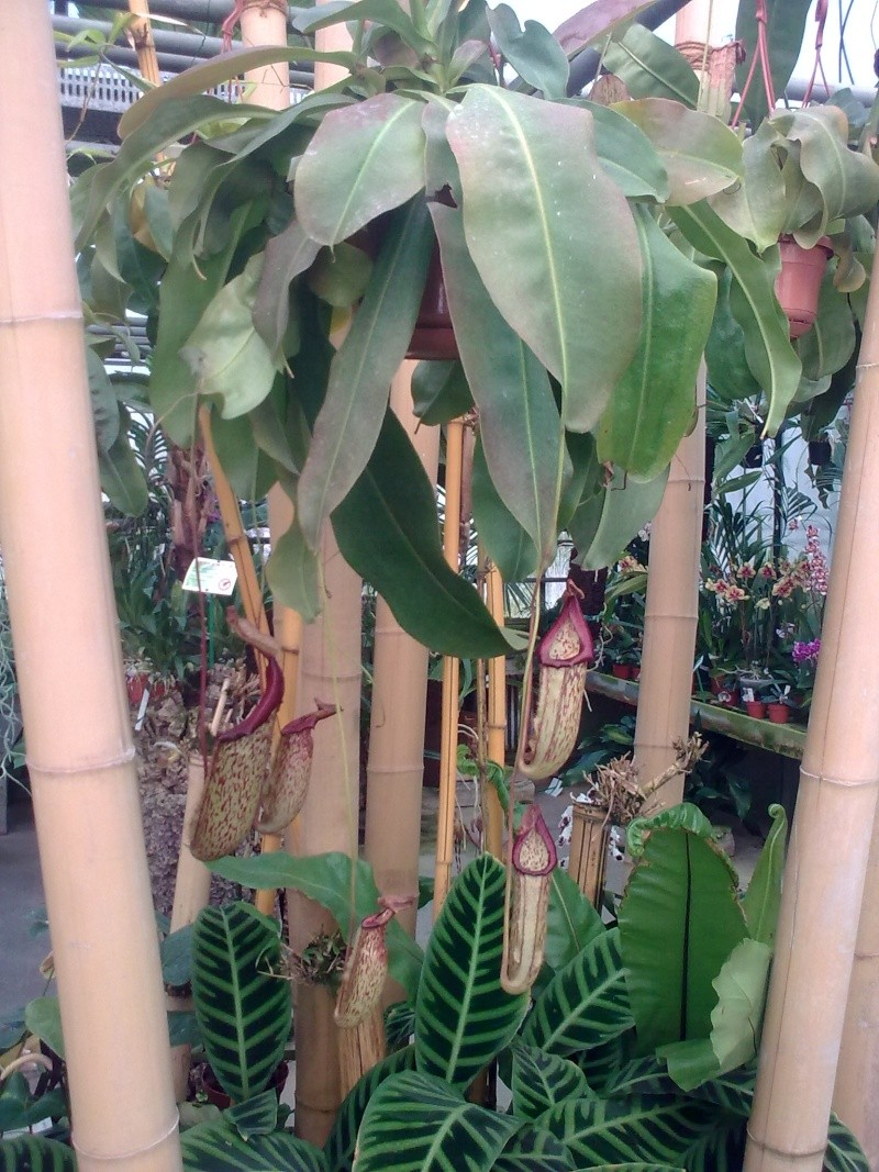 Orchidarium de Prangins (VD) 01042012
