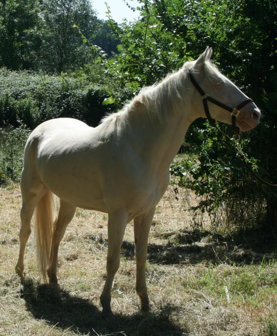 NEIGE, le cheval imprévu Atalon11