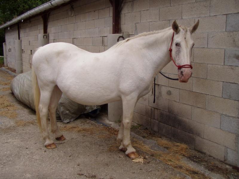 NEIGE, le cheval imprévu Cages_10