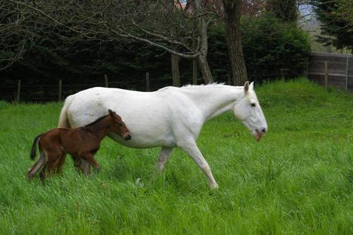 NEIGE, le cheval imprévu Juju_b10