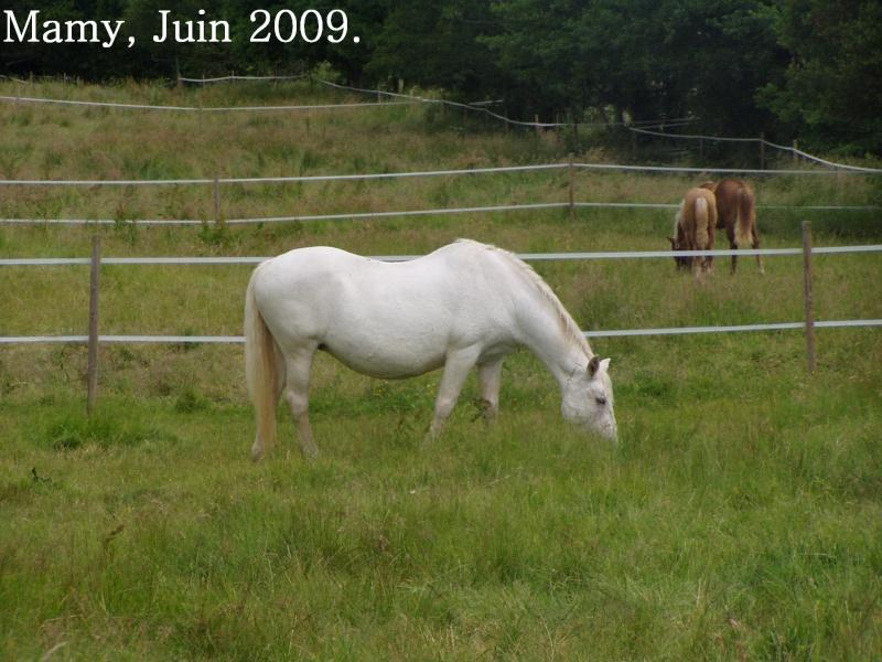 NEIGE, le cheval imprévu Mamy_011