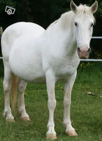 NEIGE, le cheval imprévu Neige11