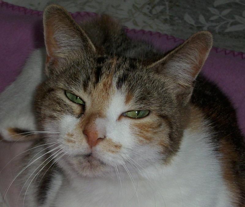 Yeux de chats - Page 2 Dsci0013