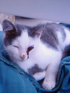 3 chatons nés à la rue à adopter Sp_a0310