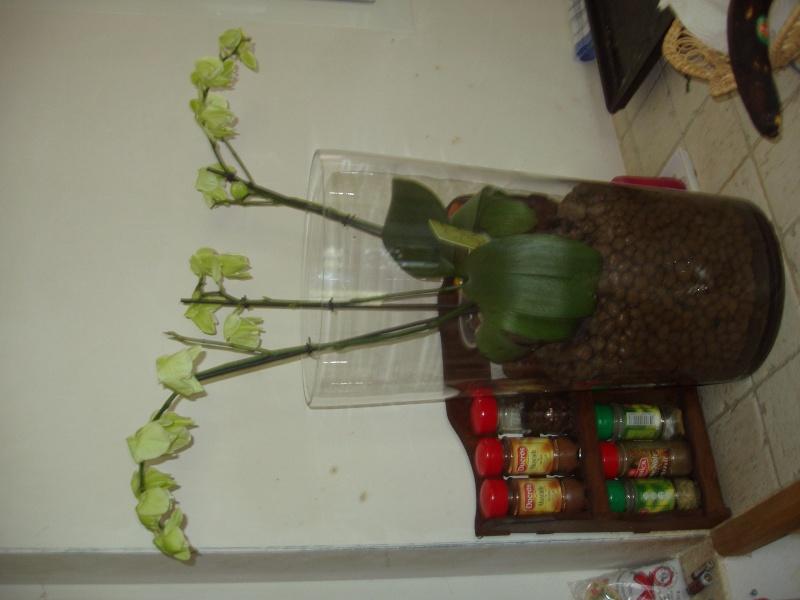 prbleme de fleurs recroquevill es sur phalenopsis. Black Bedroom Furniture Sets. Home Design Ideas