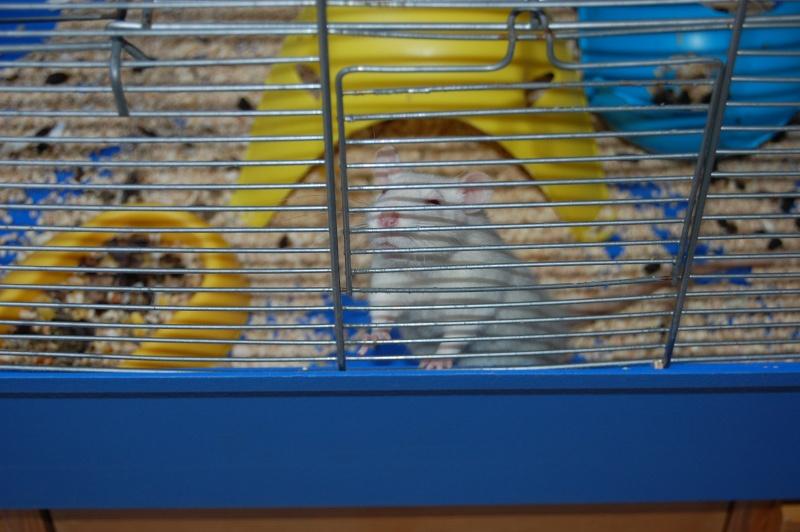 Nos ratoux !!! Dsc_0744