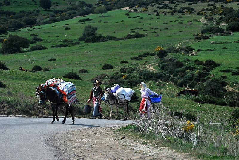 Voyage au Maroc 513