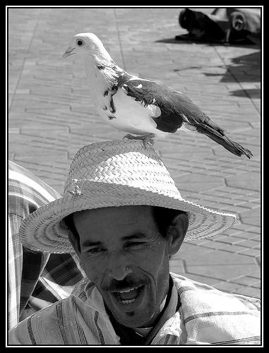 ... Portraits marocains 86341610