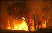 TRISTE NOUVELLE !!!  Incendie dans la forêt de Maâmora Incend10
