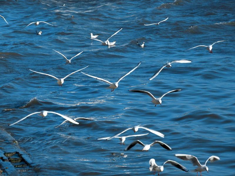 Bonne journée à Tous ... Oiseau13