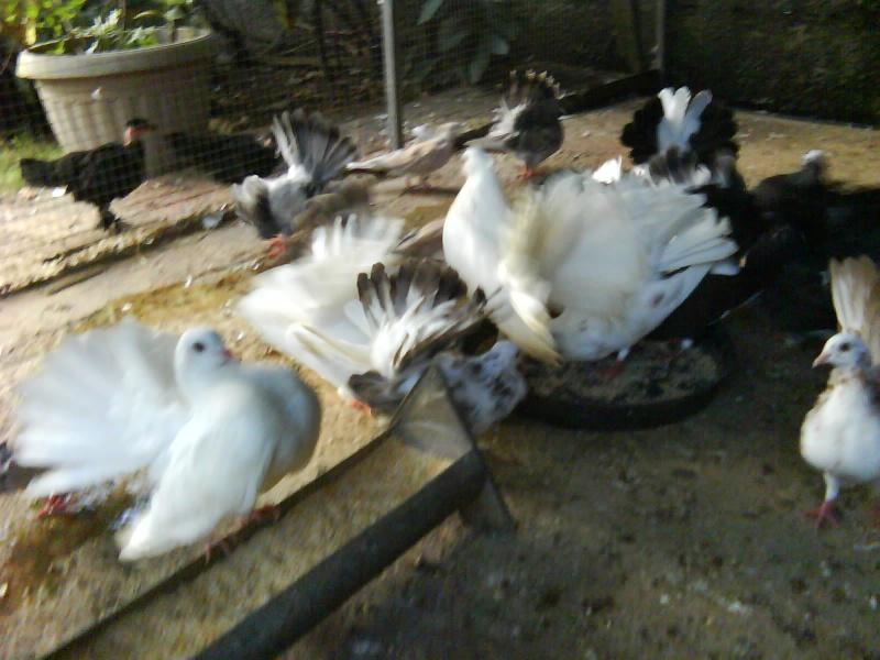 L'élevage de BANA Dsc00038