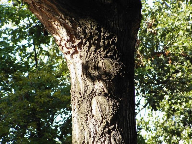 Fotoprojekt - Bäume - Seite 3 Pic00310