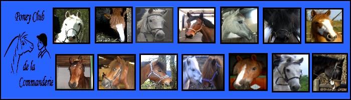 www.poneyclubdelacommanderie.fr