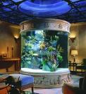 L'aquarium et aquariophilie