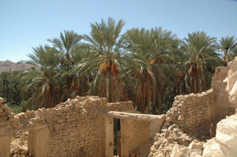 صور لغابات و آثار منطقة نقرين Negrin10