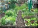 زراعة المنزل