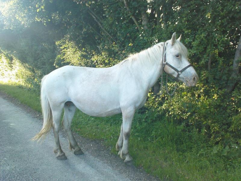 Pascaline, jument grise, 17 ans (Placée) Dsc01410