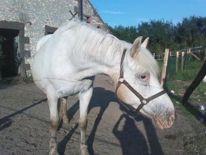 Pascaline, jument grise, 17 ans (Placée) Dsc01411