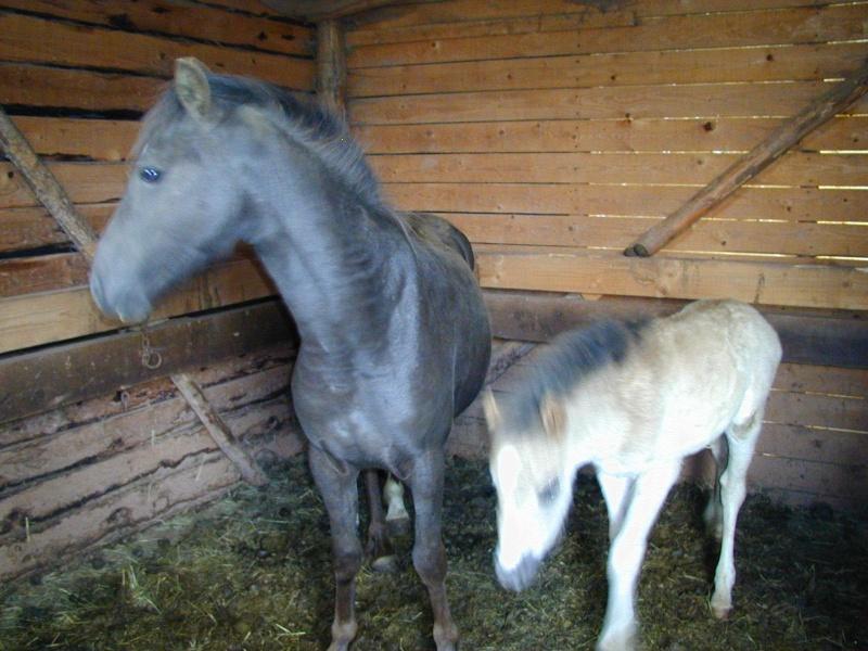 Cassis, ponette , 4  à 5 ans (ADOPTEE) P1010011