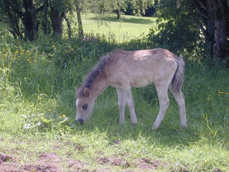 Cassis, ponette , 4  à 5 ans (ADOPTEE) Poulai10