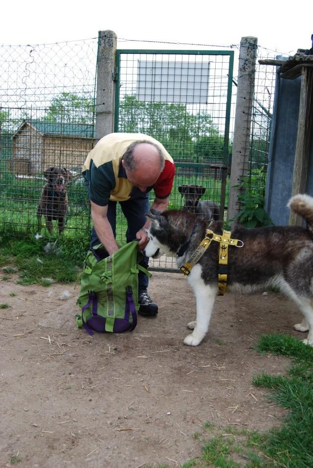 Andrea, siberian hushky,11 ans (58)   DECEDEE - Page 3 Dsc_1413