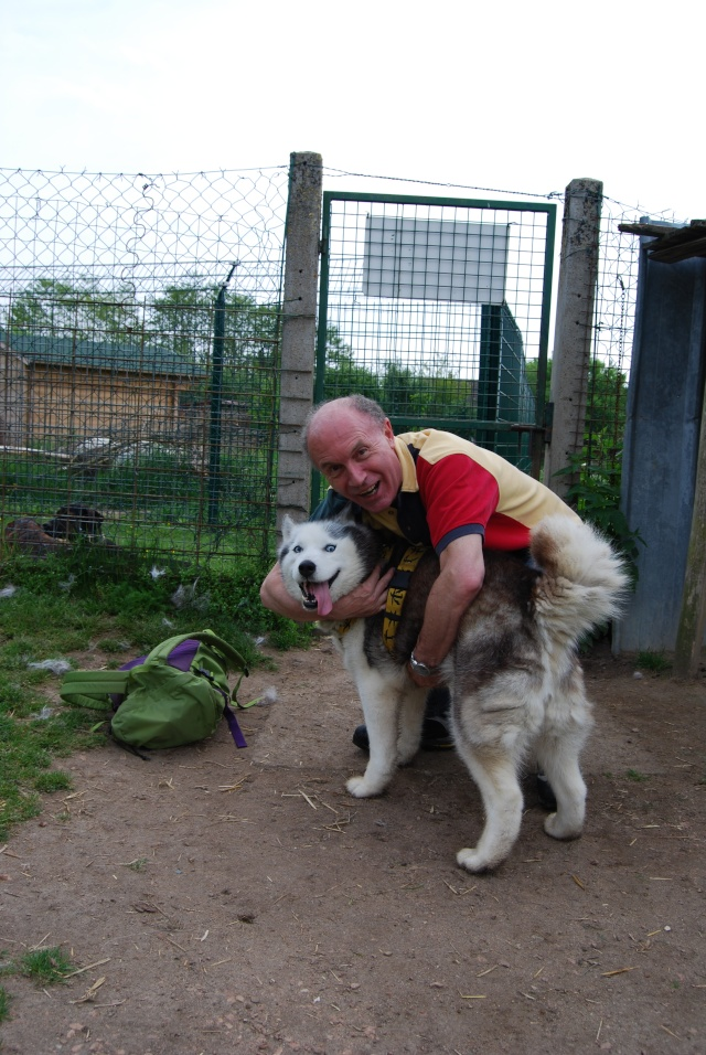 Andrea, siberian hushky,11 ans (58)   DECEDEE - Page 3 Dsc_1415