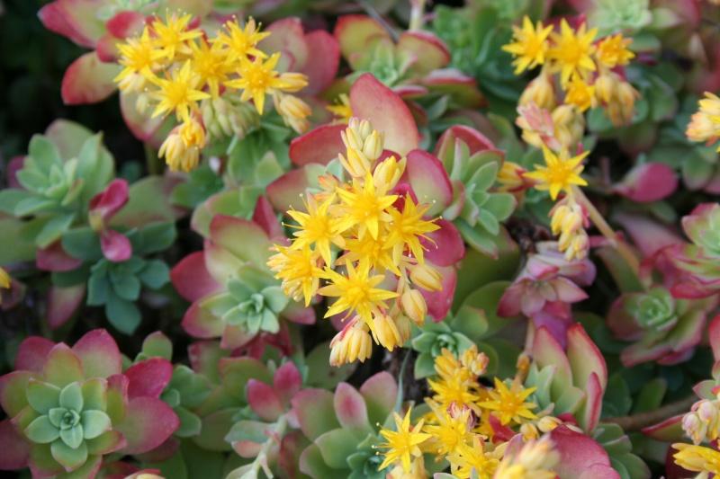 Floraison Img_0111