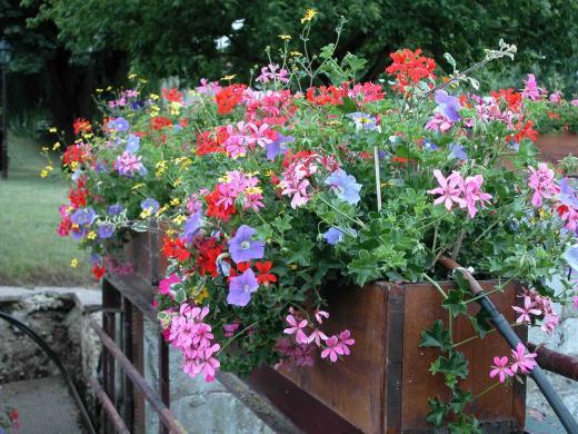 ma première jardinnière Jardin10