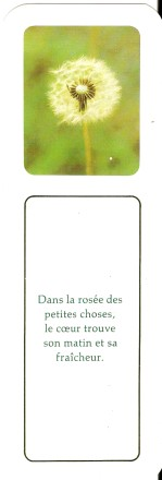 Proverbes - citations -  jolies phrases - pensées Numa2743