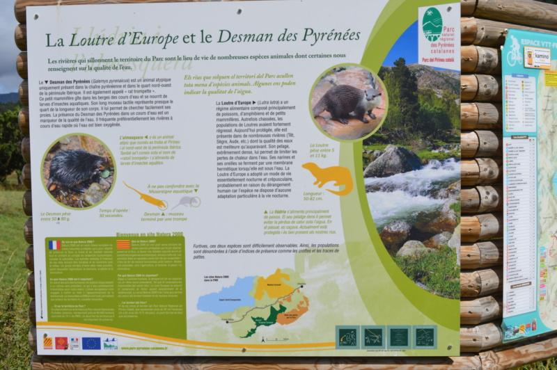 [Autres voyages/France] Balades dans le Capcir( Pyrénées Orientales) Dsc_0274