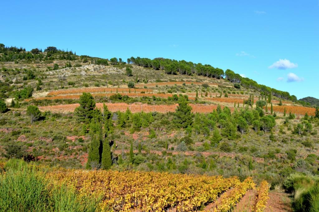 [Autres voyages/France] Balade automnale dans les vignes de Tuchan Dsc_0482