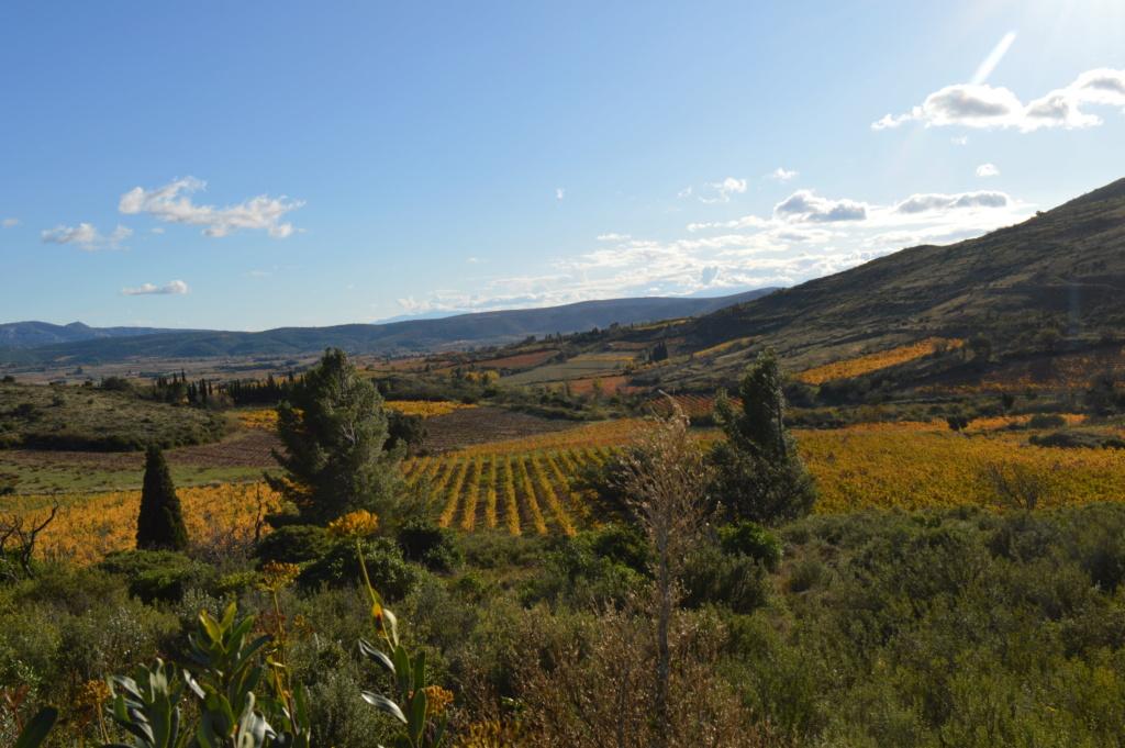 [Autres voyages/France] Balade automnale dans les vignes de Tuchan Dsc_0491