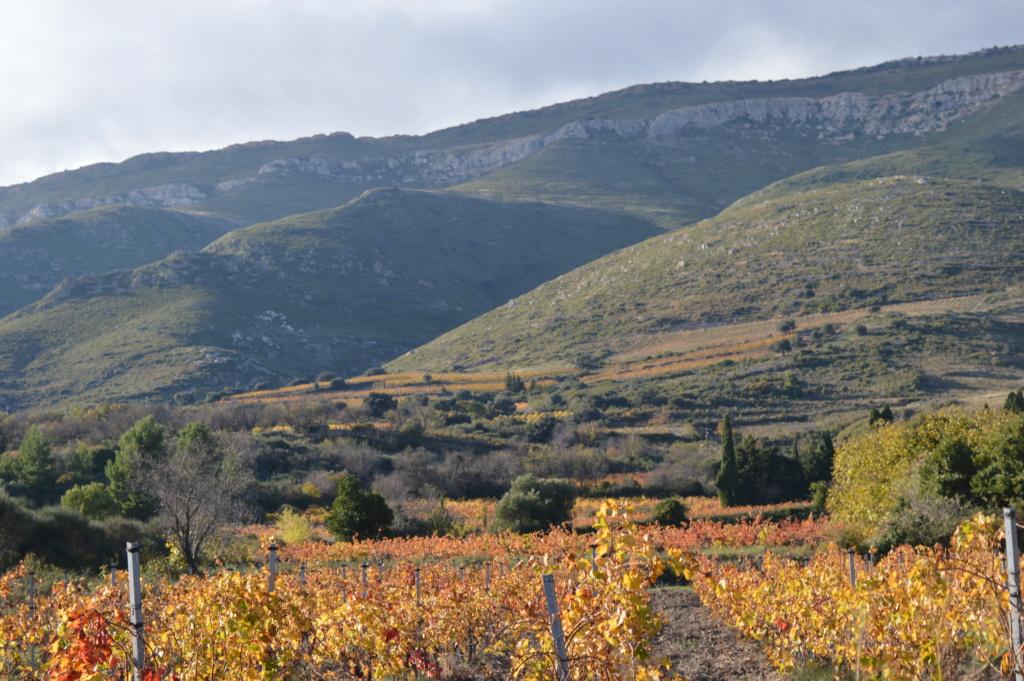 [Autres voyages/France] Balade automnale dans les vignes de Tuchan Dsc_0509