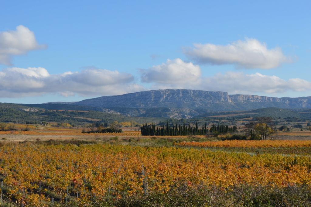 [Autres voyages/France] Balade automnale dans les vignes de Tuchan Dsc_0531