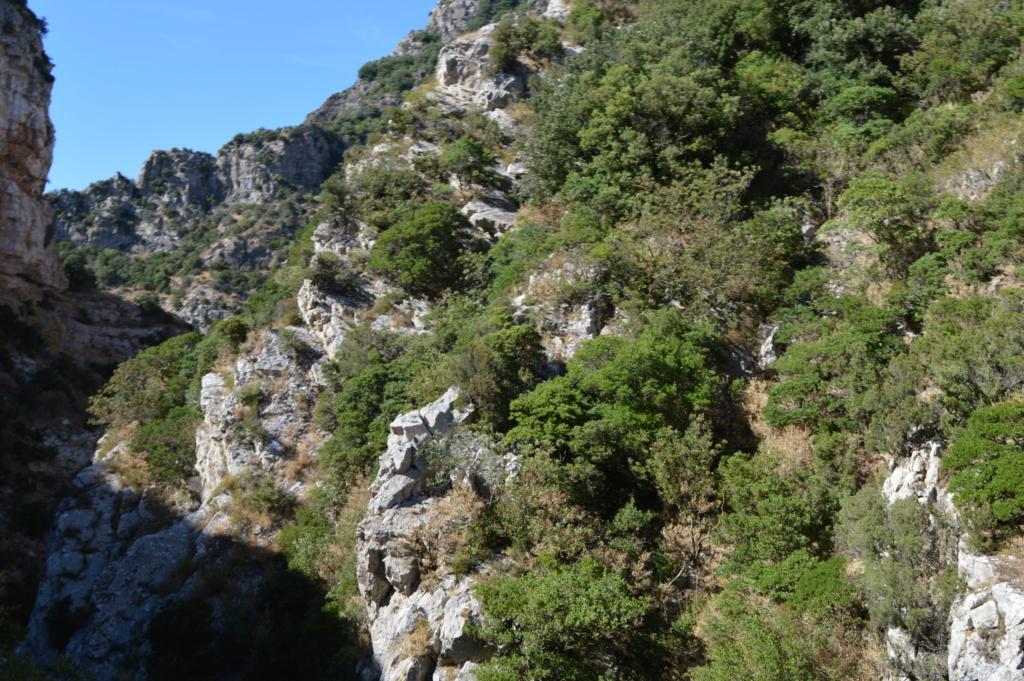 [Autres voyages/France] Balade dans les Hautes Corbières Dsc_0733