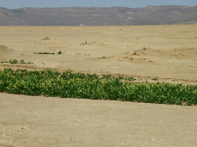 [Maroc Camp/Dernières nouvelles] [route tazarine merzouga Imgp9911