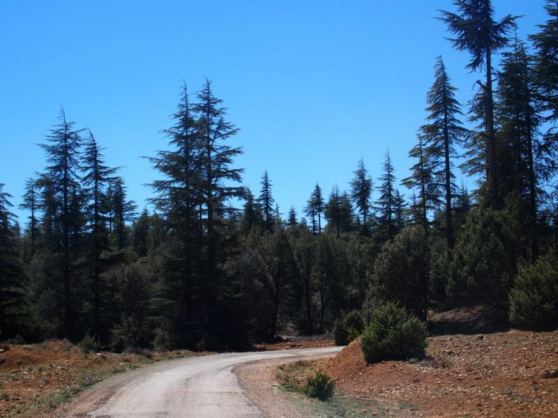 [Maroc/Histoire, Accueil...] successeur cèdre gouraud Route_10