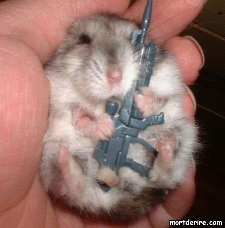 Depeche AFP trés serieuse !!!!!!!!!!! pauvre Hamster. Hamste10