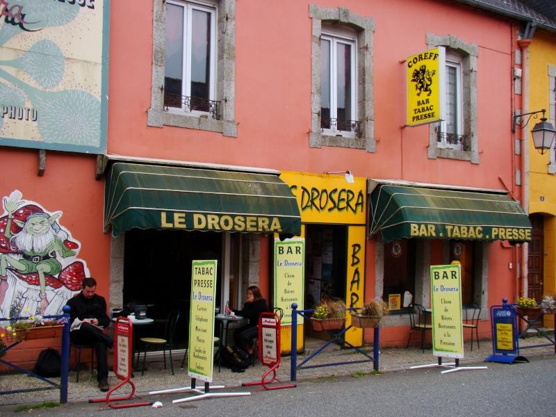 Les Drosera des monts d'arrée en Bretagne Dsc06712