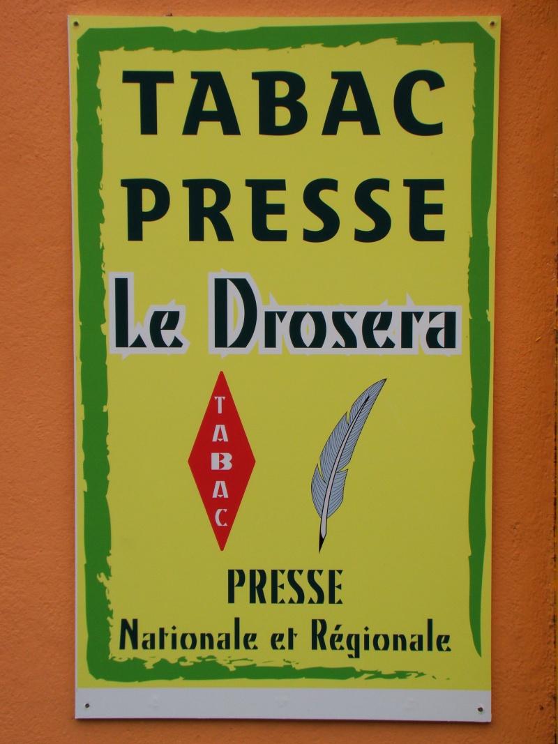 Les Drosera des monts d'arrée en Bretagne Dsc06714