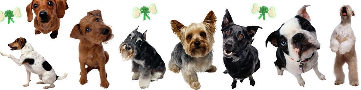 Форум Планета собак
