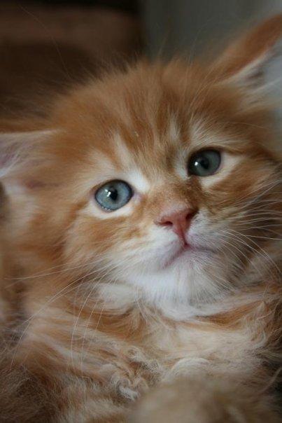 Jeg skulle aldri mer ha katt. - Page 6 6928_310