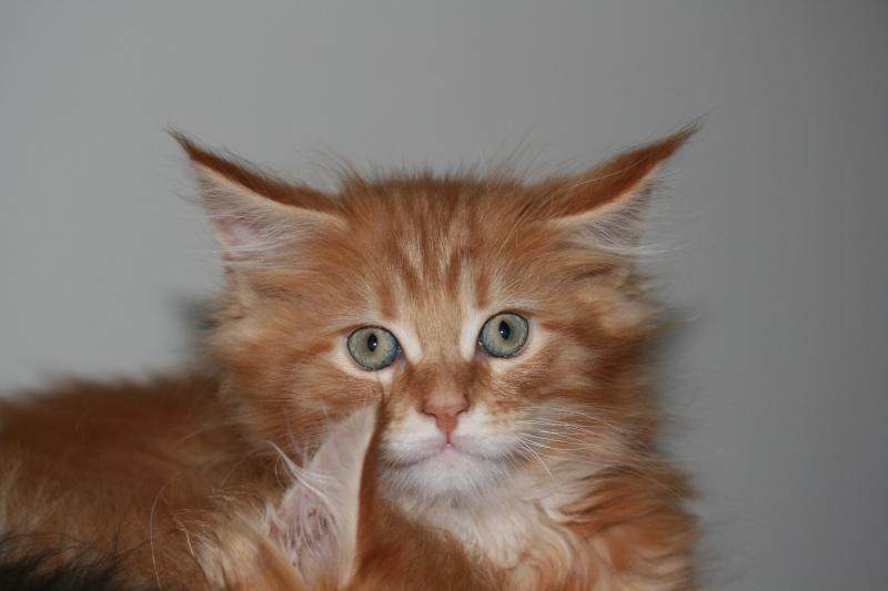 Jeg skulle aldri mer ha katt. - Page 6 Img_7017
