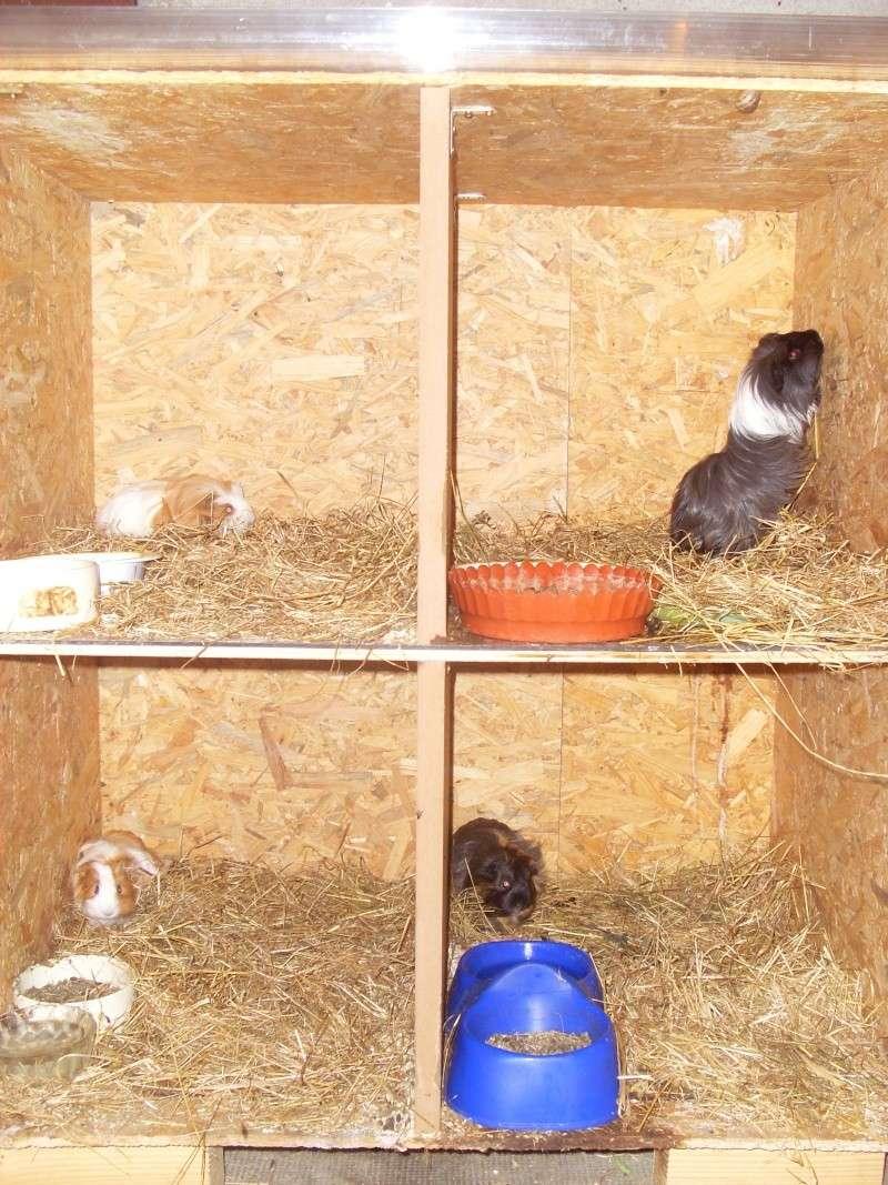 Clapier fait maison...de la place pour 4! 2009_016