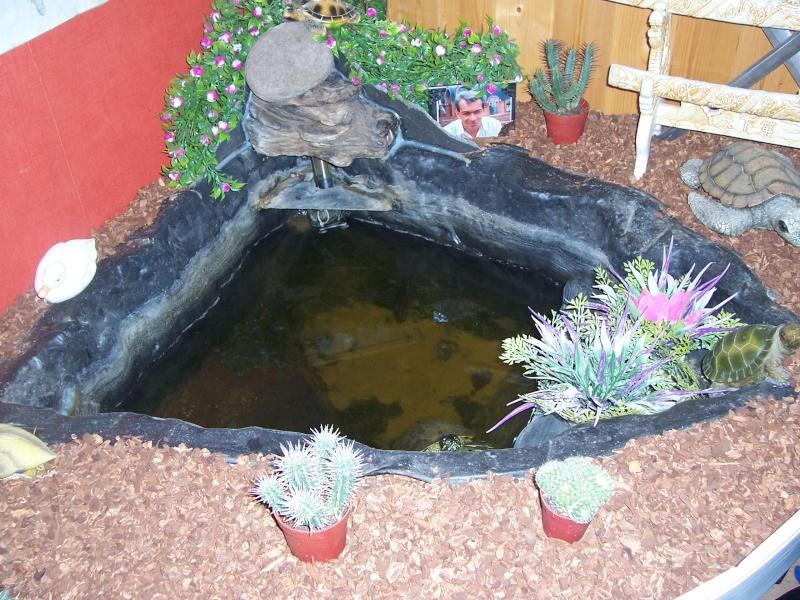 bassin d'intérieur pour tortues - Page 13 106_4222