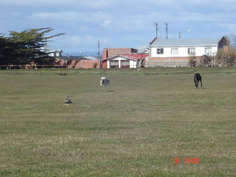 Carreras en La PATAGONIA CHILENA Loca_012